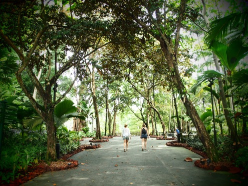 The lush canopy of the Botanic Garden