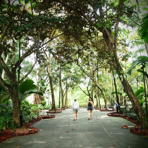 The lush canopy of the Botanic Garden