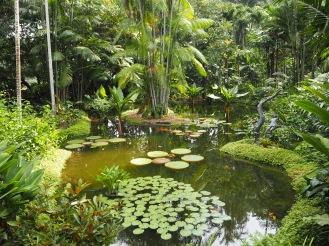 A tropical lagoon
