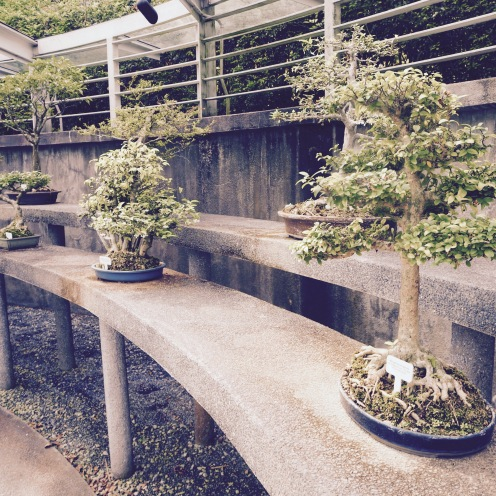 A small part of the extensive Bonsai collection