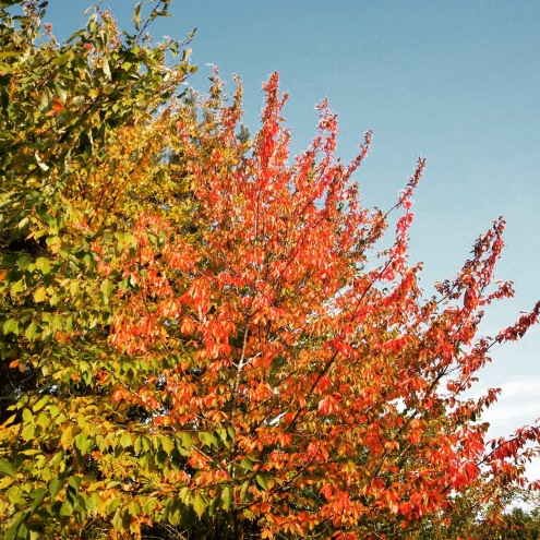 The changing leaves of autumn in Leicestershire