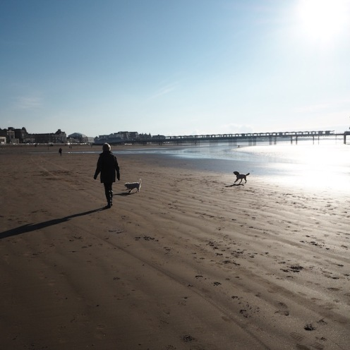 Walking the dogs on Weston-Super-Mare beach