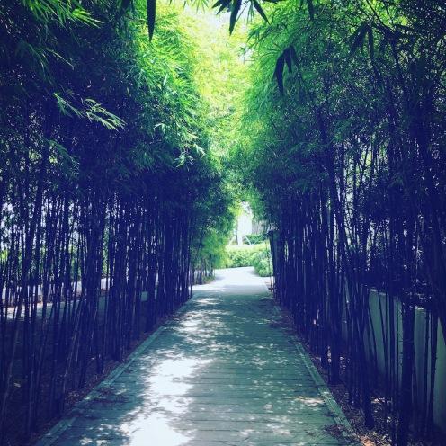 A bamboo maze.