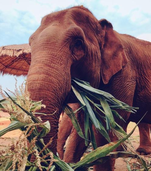 At the amazing Elephant Nature Park, Chinagmai