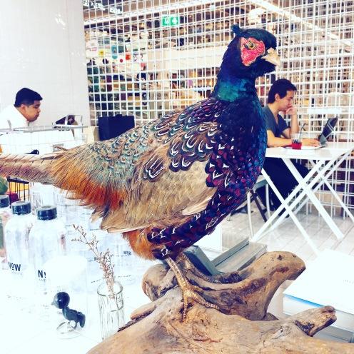 A Bangkok Pheasant...