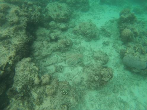 Spot the Octopus!