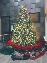 One of the school's Christmas trees