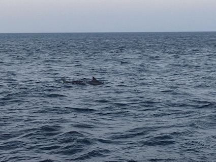 Wild dolphins!